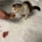õuepilt Cats Help MTÜ lehelt